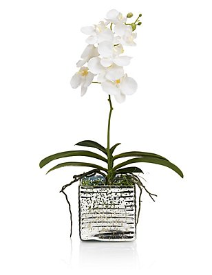 Orchid in Mercury Glass Arrangement, , catlanding