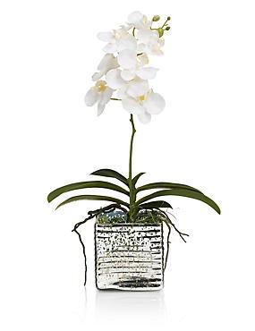 Orchidee in Glas mit Quecksilbereffekt, , catlanding