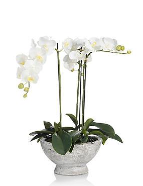 Artificial Large Orchid in Ceramic Jar, , catlanding