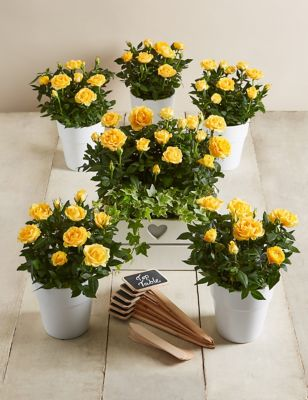 Celebration table plan yellow send flowers free delivery celebration table plan yellow izmirmasajfo