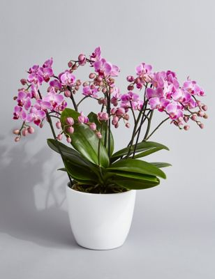Marks and spencer flowers flowers online flowers delivered uk 100 orchid flowers izmirmasajfo Images