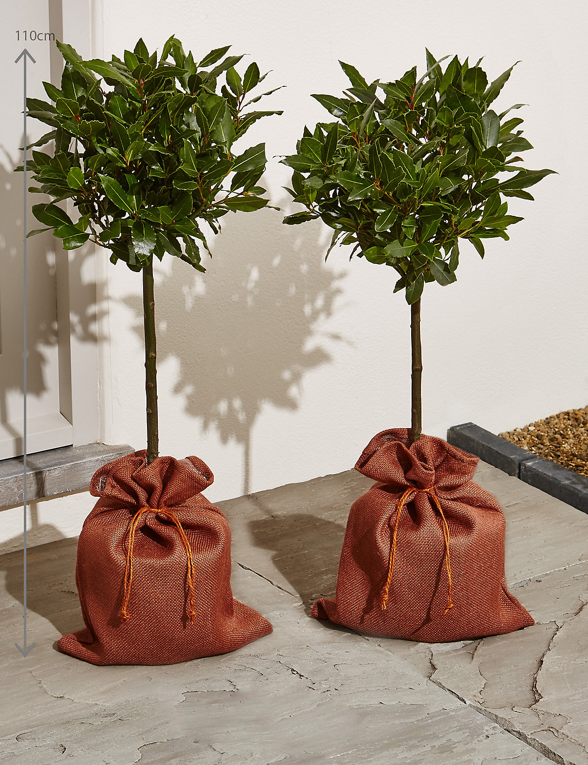 Pair of Standard Bay Trees