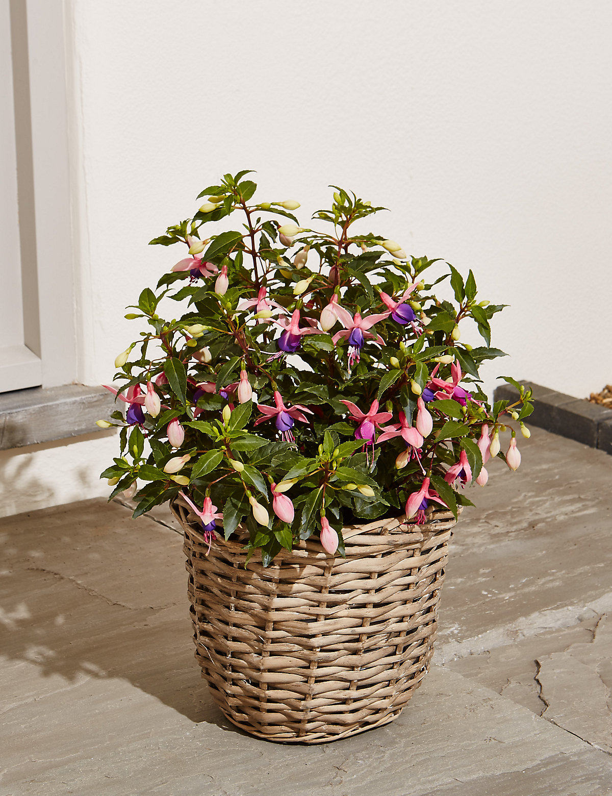 Fuchsia Patio Basket