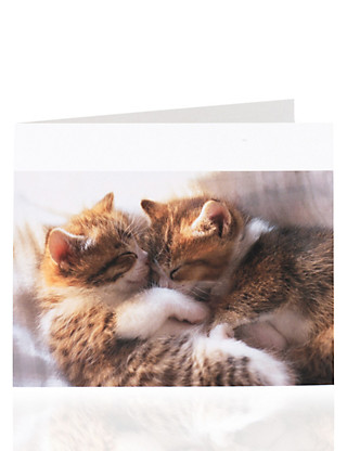 Cats Cuddling Blank Card Home