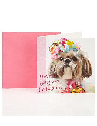 Gorgeous Dog Birthday Greetings Card Home