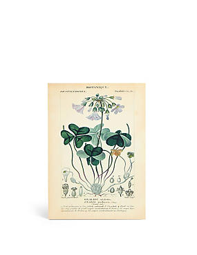Botanical Wall Art, , catlanding