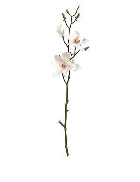 Magnolia Spray, , catlanding
