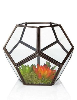 Succulent Terrarium, , catlanding