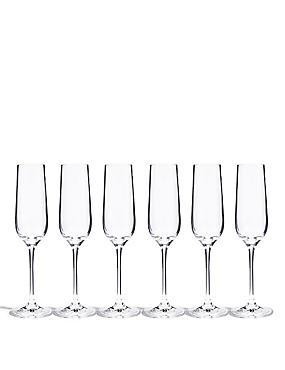 6 Accent Champagne Flutes, , catlanding