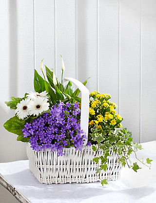 Large Classic Flowering Basket Flowers