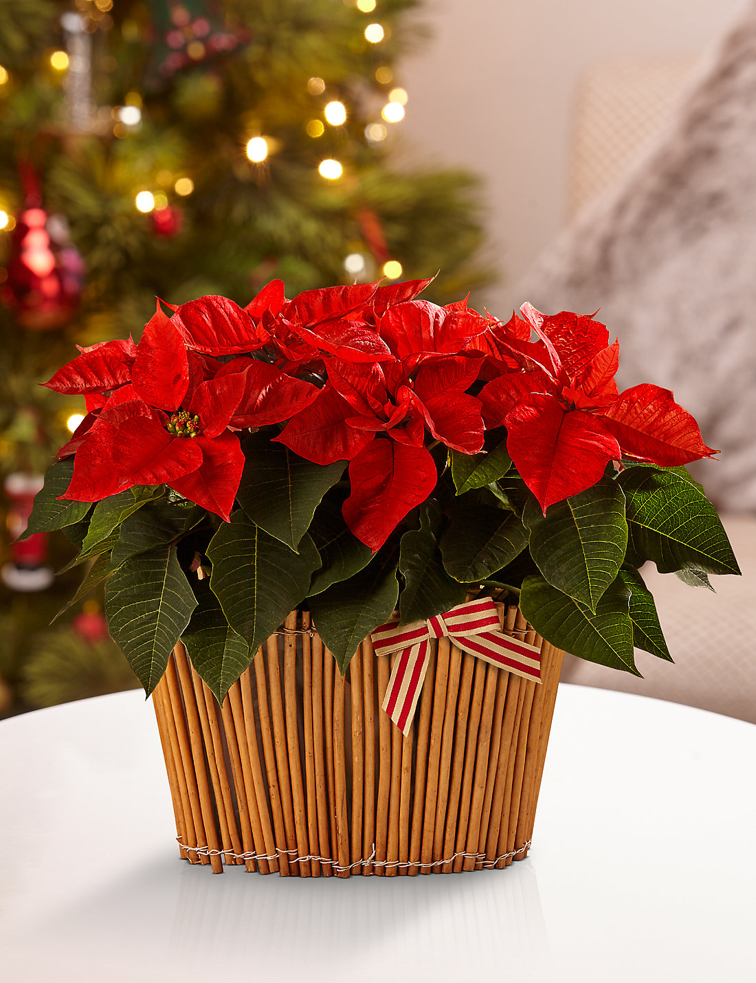 christmas poinsettia basket m u0026s