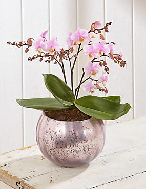 Mother's Day Pink Jungle Orchid (Pre Order)