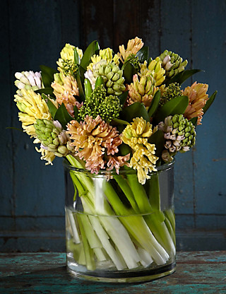 Autograph™ Speciality Hyacinths Flowers