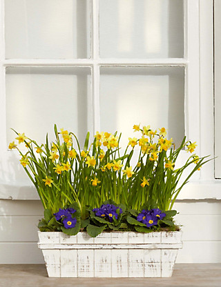 Windowsil Planter Flowers