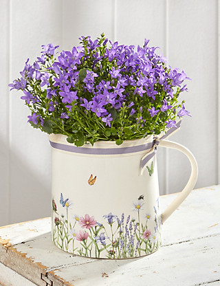 Flowering Campanula Jug Flowers