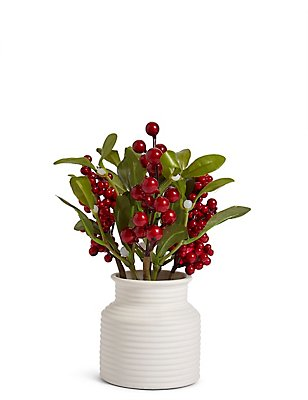 Winter Berry Mistletoe, , catlanding