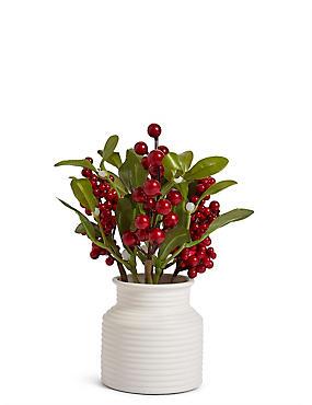 Winter Berry Mistletoe, , catlanding