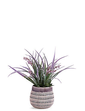 Lavender in Ceramic Pot, , catlanding