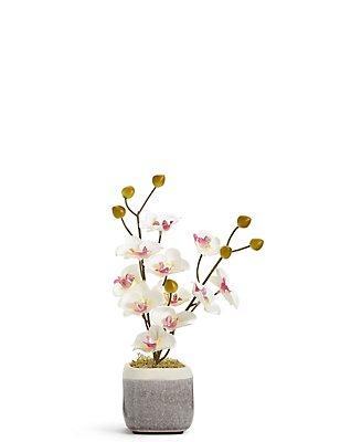Mini-Orchidee mit Topf im Krakelee-Design, , catlanding