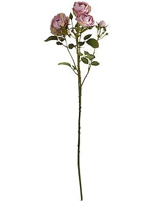 Rose Bunch, PINK, catlanding