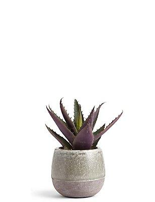 Aloe-Pflanze mit Topf im Krakelee-Design, , catlanding