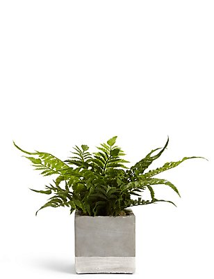 Fern in Grey Pot, , catlanding