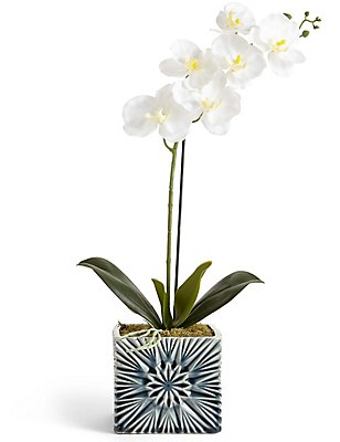 Orchid in Geo Pot, , catlanding