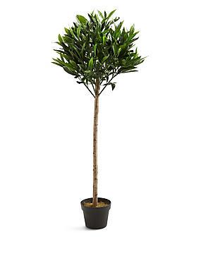 Bay Tree, , catlanding
