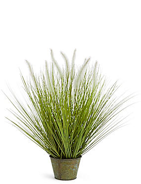 Foxtail Grass, GREEN MIX, catlanding