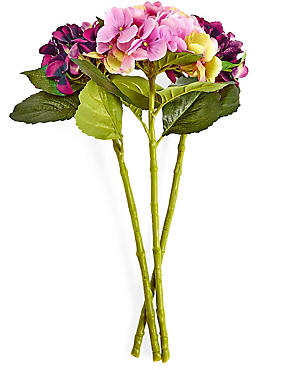 Hortensien-Strauß, , catlanding
