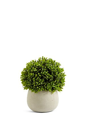 Topiary in Ceramic Pot, , catlanding