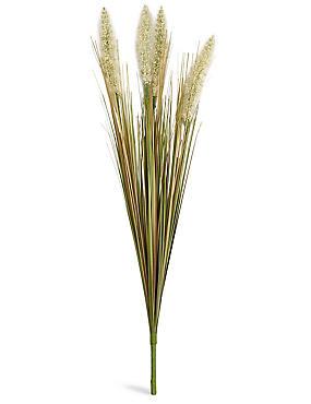 Grass Spray, , catlanding