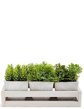 Grass Trio in Wooden Tray, , catlanding