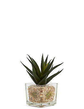 Succulent in Glass Cube, , catlanding