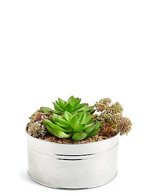 Succulentes assorties, , catlanding