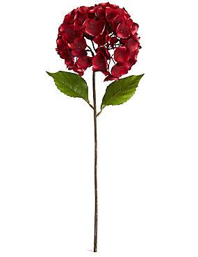 Short Hydrangea, PINK, catlanding