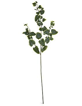 Ivy Stem, , catlanding
