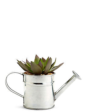 Succulent in Watering Can, , catlanding