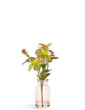 Christmas Rose in Jar, , catlanding