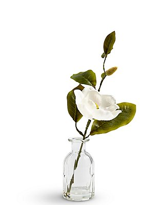 Magnolia in Bottle Vase, , catlanding