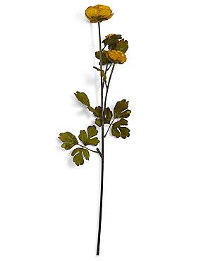 Ranunculus Stem, OCHRE, catlanding