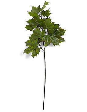 Maple Leaves Stem, , catlanding
