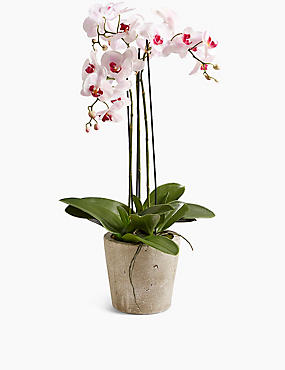Large Orchid in Ceramic Pot, SOFT PINK, catlanding
