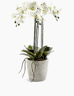Grote orchidee in keramische pot, WIT MIX, catlanding