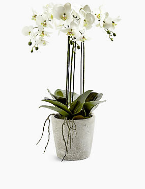 Large Orchid in Ceramic Pot, WHITE MIX, catlanding