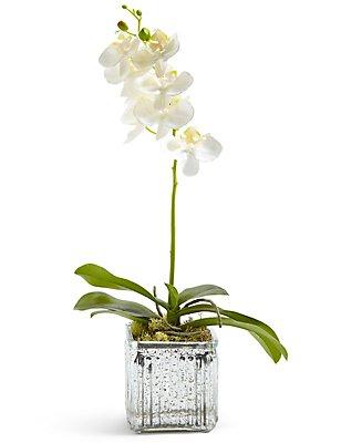 Orchidée disposée dans un vase en verre mercure cubique, , catlanding