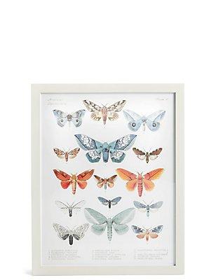 Adorno de pared con American Lepidoptera, , catlanding