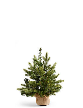 1.5Ft Fraser Fir Tree, , catlanding
