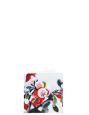 Red Winter Berry Christmas Charity Cards Pack of 20, , catlanding
