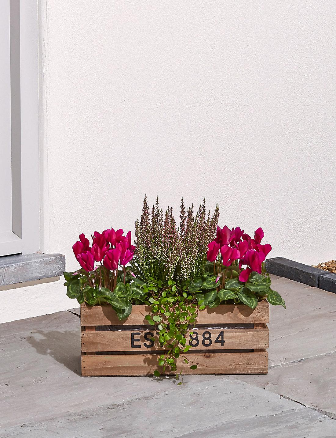 house potted u0026 garden plants online hanging basket plants m u0026s